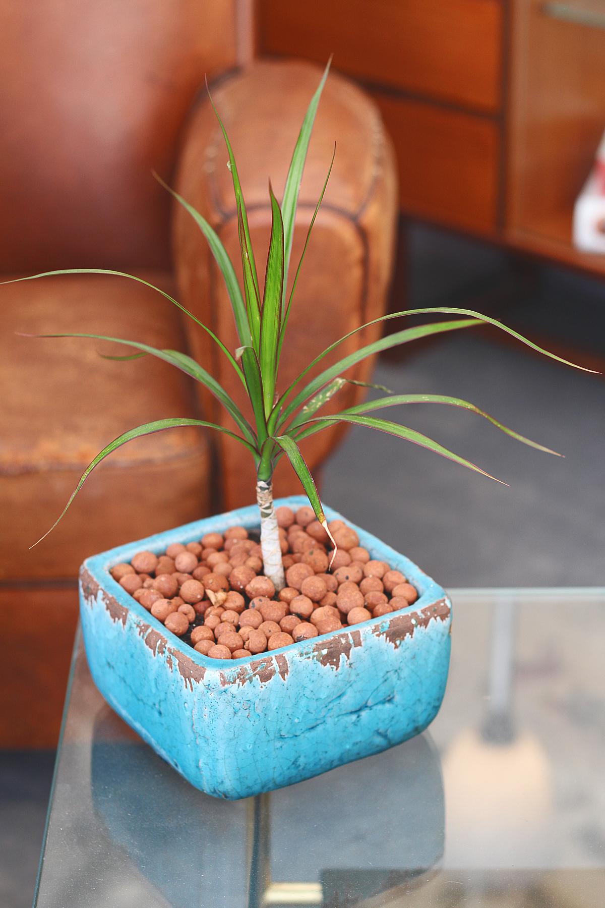 foire de chatou atelier-brocante-plante
