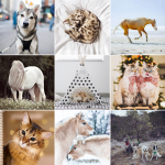 <!--:en-->Instagram Love #3 | Pets<!--:--><!--:fr-->Instagram Pic et Pic et Colégram #3 | Pets<!--:-->
