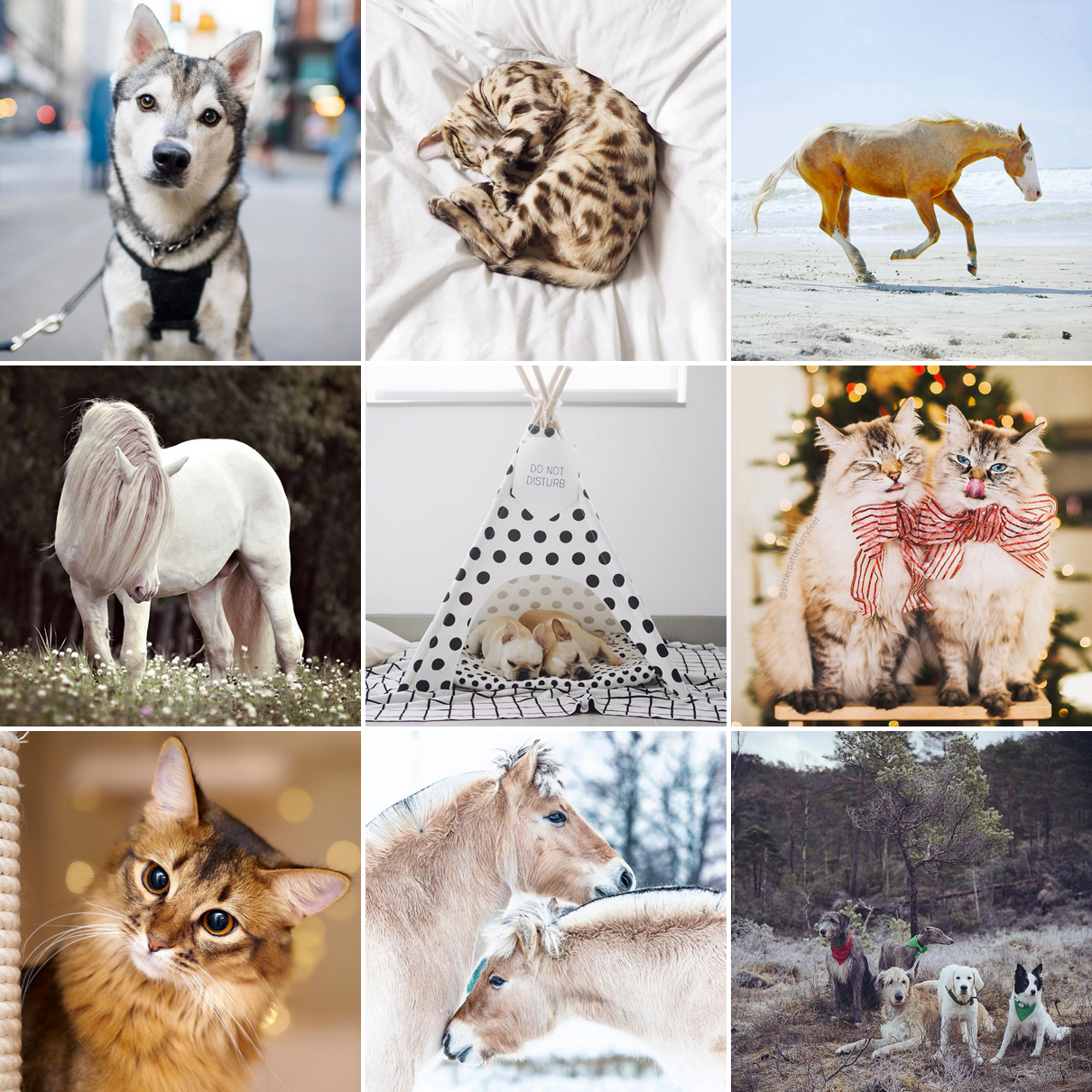 patchwork-instagram-animaux